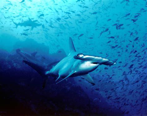 Top 10 des plus belles Plongées Sous Marine dans le Monde