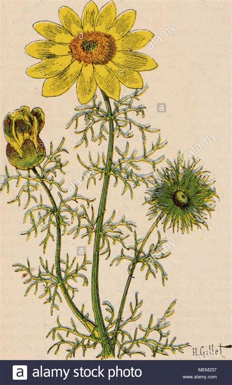 Plante D Intérieur Photo by Cryptanthus Stock Photos Cryptanthus Stock Images Alamy