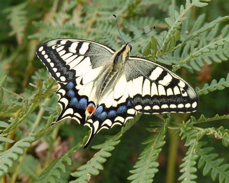 imagenes de orugas extrañas mariposas macan a 1 20 foro de infojardn