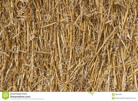 wheat straw stock image image