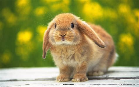 bunny rabbits images bunnies wallpaper photos 16437969