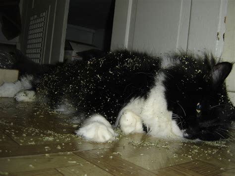 is catnip bad for dogs bad 10 photos of cats whose looks say what catster