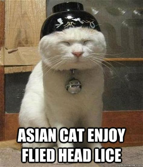 Lice Meme - asian cat enjoy flied head lice rice bowl cat quickmeme