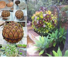 gorgeous gardening create your own hanging succulent ball