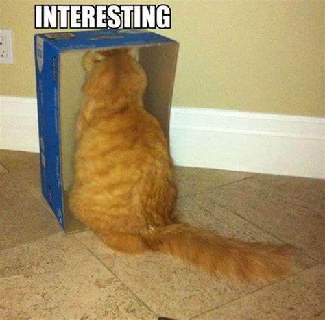 Stupid Cat Meme - stupid cat memes image memes at relatably com