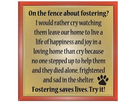 foster homes for dogs puppy foster homes needed batavia il patch