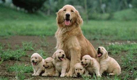 images of dogs and puppies cutest momma dogs and puppy photos pet tips daily