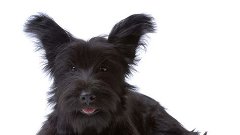 chronic diarrhea in dogs chronic diarrhea in dogs