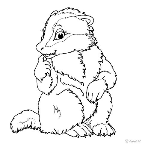 coloring pages nature animals coloring pages nature animals nature coloring pages