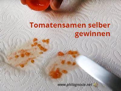 Tomatensamen Selbst Ziehen 4784 tomatensamen selbst ziehen tomaten ziehen tomaten