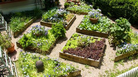 in our backyard how to do smart edible landscaping in our backyard