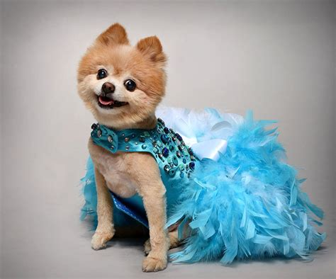 puppy dresses dress wedding turquoise bling satin feather harness