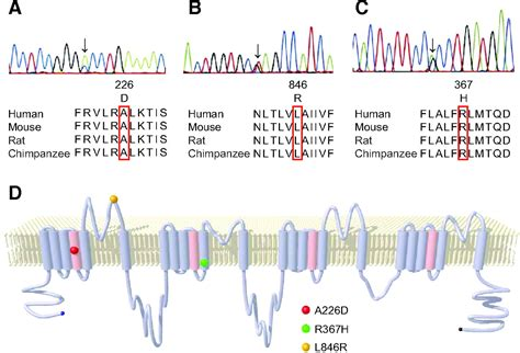 Brugada Patient Letter Electrocardiographic Characteristics And Scn5a Mutations In Idiopathic Ventricular Fibrillation