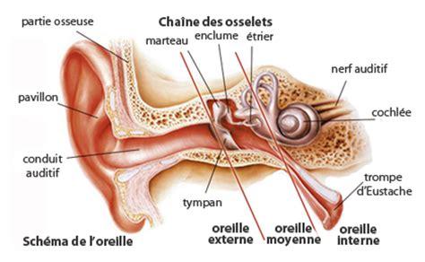 schema oreille audilo
