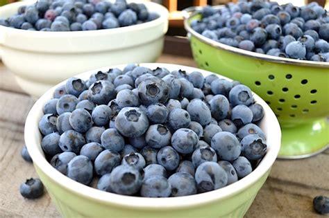 blueberries freezing drying canning fresh recipes