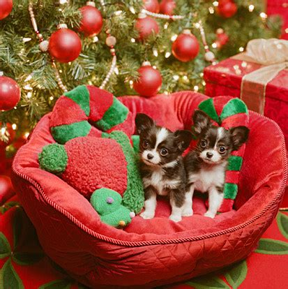 top 10 christmas gifts for dogs
