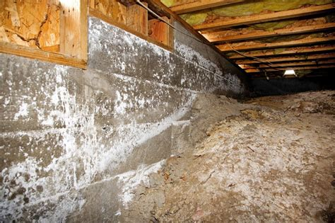 the importance of crawl space mold removal in