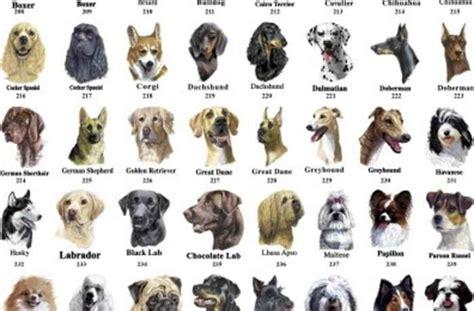 breed list aggressive breeds list