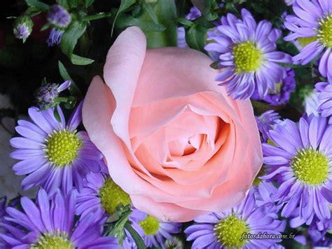 imagenes de flores rosas flores rosas jcgellibert mi web
