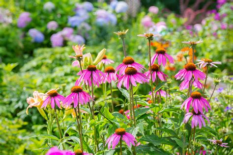 how to garden flowers easiest perennials to grow how to an easy garden