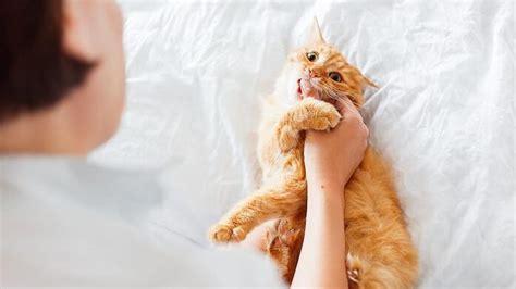 Kater Milchtritt Decke by Warum Erbrechen Katzen Haarballen 9 Typische
