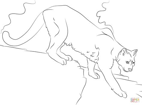 coloring pages mountain lion puma coloring page free printable coloring pages