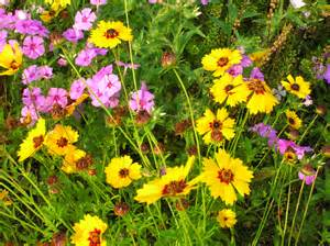 wildflower backyard planting a wildflower garden in florida gardeningonthego