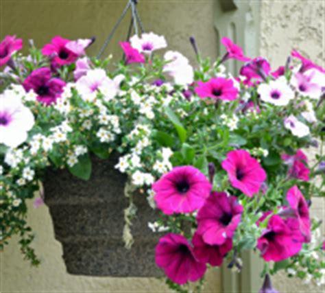 Schöne Balkonpflanzen by H 228 Ngepflanzen F 252 R Balkon Welche Pflanzen Sind Auf Den