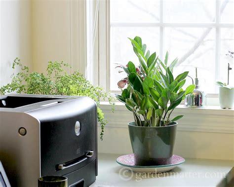 indoor plant ideas indoor plant ideas the zz plant garden matter