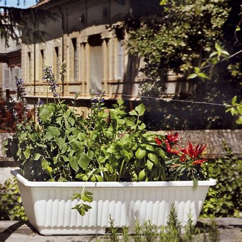 vasi con riserva d acqua vaso in plastica con riserva d acqua 67 x 37 x h 20 cm