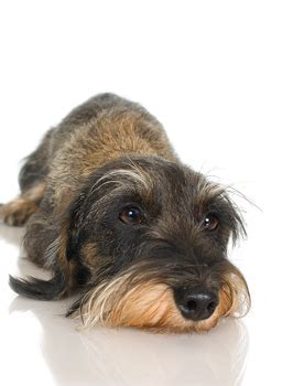what causes puppy breath bad breath in dogs teeth
