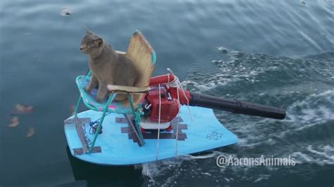 boat driving water skiing homemade jet ski aarons animals youtube
