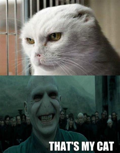Voldemort Meme - voldemort cat www meme lol com fandoms are families