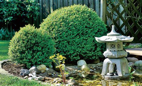 Buchsbaum In Form Schneiden 2025 by Buchsbaum Schneiden Baumschnitt Selbst De