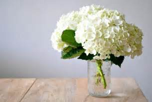Flowers In White Vase by White Hydrangea E1339353120798