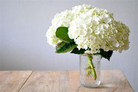 white hydrangea e1339353120798
