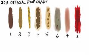 Abnormal Stool Sle Results by The Gallery For Gt Pale Stool In Adults
