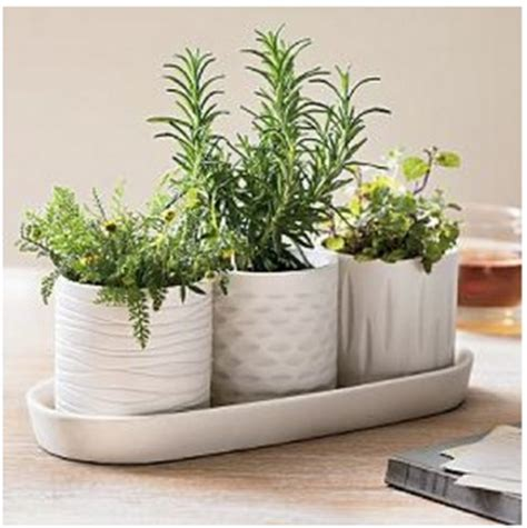 herb pots for windowsill window sill herb pots future house ideas pinterest