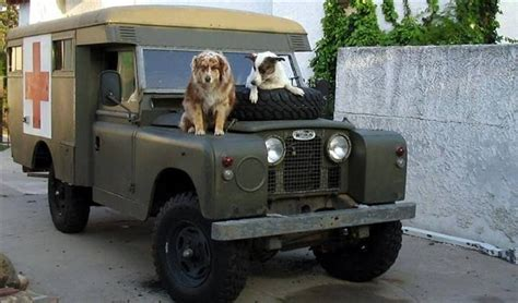 land rover setter dog 17 best images about soldier soldier on pinterest