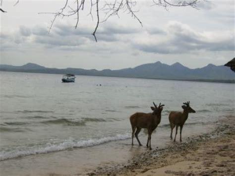 Promo Spesial Tanpa Kawat Pantai Murah pulau menjangan paket wisata ke bali paket tour bali