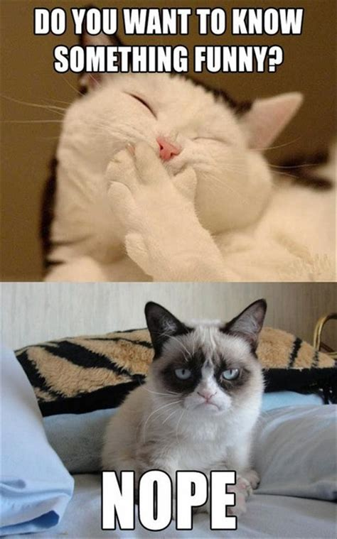 Random Cat Meme - grumpy cat funny jokes dump a day