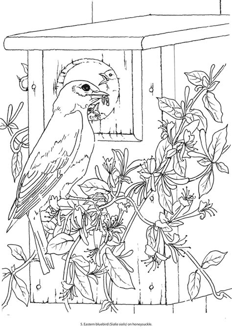 creative birds dot to dot coloring books welcome to dover publications
