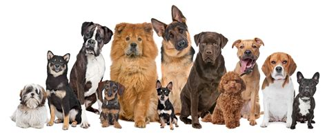 how many puppies do dogs 187 my isn t listening to my teaching methods help