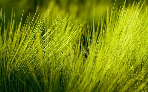 Green Grass by Green Grass Wallpapers And Images Wallpapers Pictures