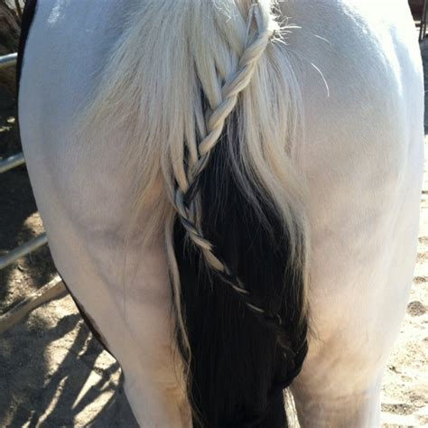 hairstyles for horses 99 best horse hairstyles images on pinterest