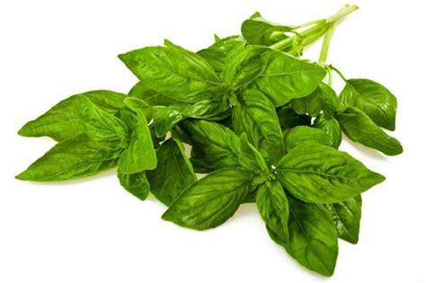ramuan obat kuat alami untuk pria jual suplemen herbal