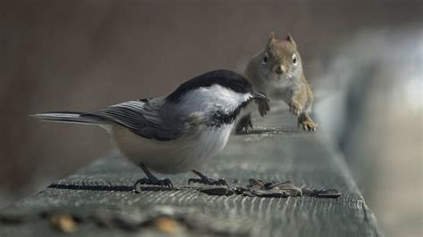 squirrel and bird wallpapers and images wallpapers