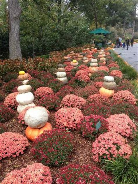 Mums And Pumpkins Picture Of Dallas Arboretum Dallas Botanical Gardens Hours
