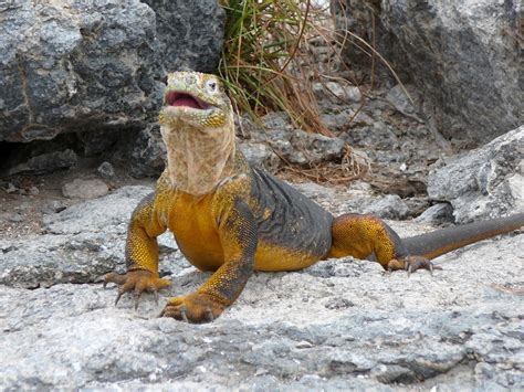 galapagos islands animals creative travel galapagos islands