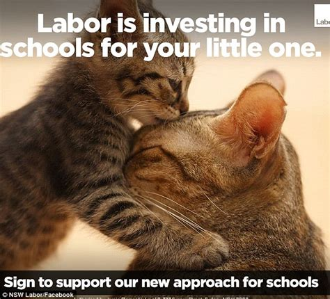 Tafe Memes - politician resorts to lame cat memes during election